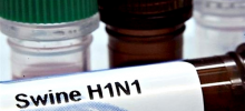 Защищаемся от свиного гриппа